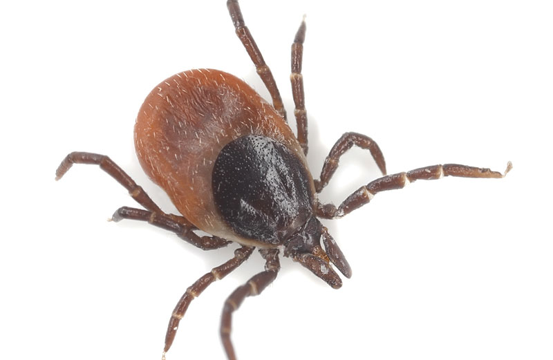 Prevention is Key to Staying Tick Free